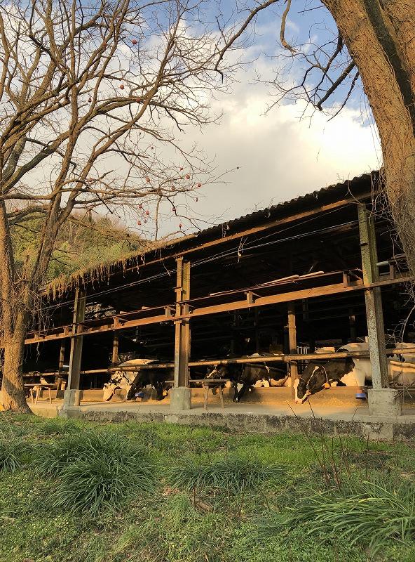 岡山・安富牧場 ファミーユ